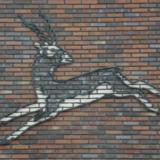 Indische antilope