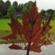 Ereteken voor de Canadese bevrijders - Robin de Krijger